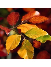 ΧΑΡΤΟΠΕΤΣΕΤΑ 33χ33 Autumn Leaves