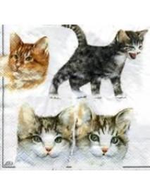 ΧΑΡΤΟΠΕΤΣΕΤΑ 33χ33 CAT