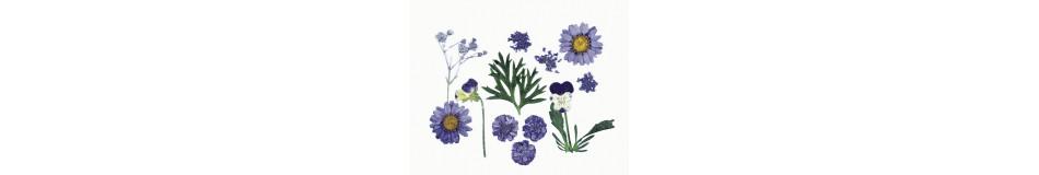 Αποξηραμένα φυτά